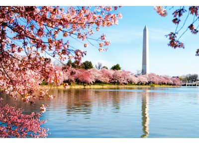 Cherry Blossom Washington DC 4 Days (Maple)